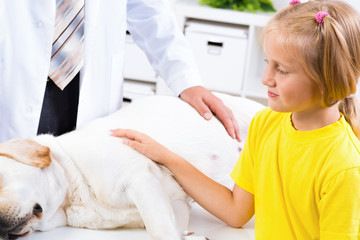 girl holds a dog in a veterinary clinic