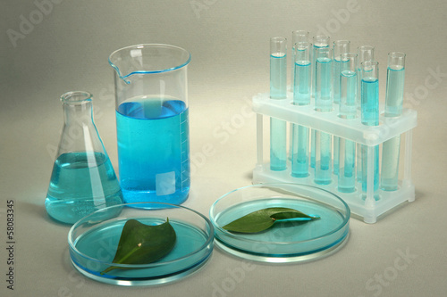 test-tubes and leaves tested in petri dishes on grey background