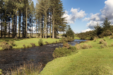 The East Dart River flowing through Bellever Forest on Dartmoor