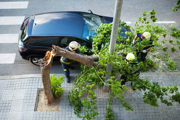 Broken tree on a car, after a storm. Fireman working.
