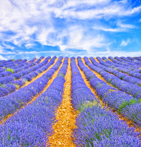 Lavender field in Provence - 58088914