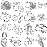 Vector illustration of  fruits collection