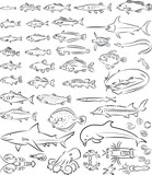 vector illustration of  sea fishes and creatures collection