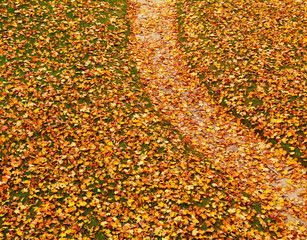 Path covered with autumn leaves
