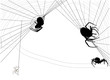 four black spiders in web on white