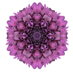 Kaleidoscopic Chrystanthemum Flower Mandala  Isolated on White