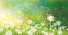 Wektor tle wiosny z białego dandelions.