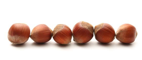 Fresh hazelnuts in line