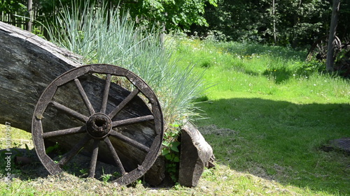 grey lying stem growing light sedges old wooden carriage wheel