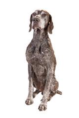 мудрая собака