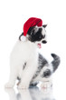 small kitten in a santa hat meowing