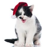meowing kitten in a santa hat poster
