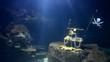 big aquarium simulations undersea (no fish)