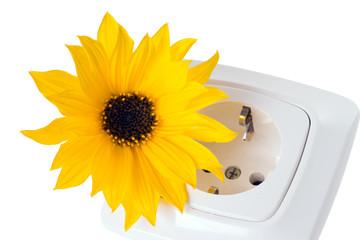 Steckdose mit Blume