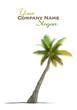 Palm tree rendering