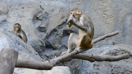 cute monkey in zoo