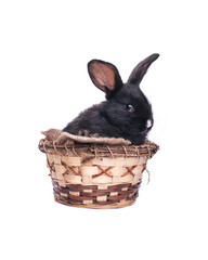 Easter bunny in an Easter