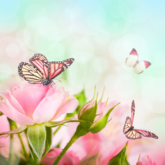 Beautiful roses and butterfly, flower, floral background