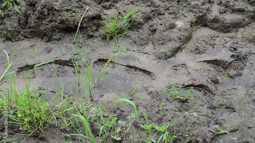 Woman legs with gumboots walk on wet dirt mud leaves footprints