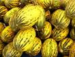 Gelbe Honigmelonen mit gelben Streifen in Istanbul Erenköy