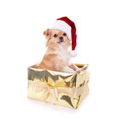 Kleiner Nikolaus Hund
