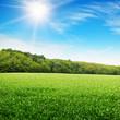sunrise over a green field
