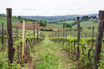 View Down Row of Grape Vines