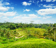 Ricce terrace of Bali Island, Indonesia
