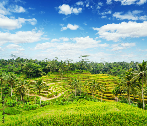 Ricce terrace of Bali Island, Indonesia
