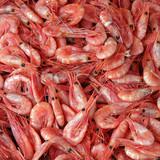 Shrimps - Hintergrund