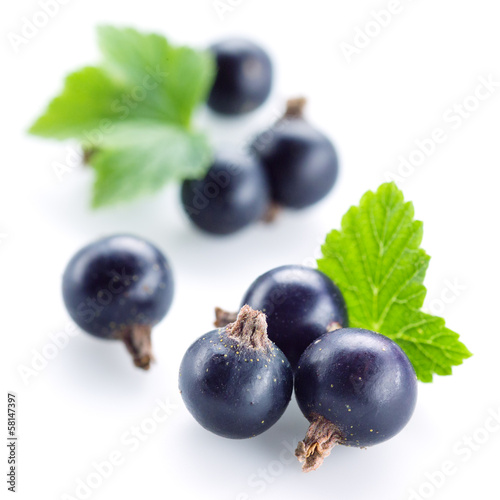 Black currant on white background