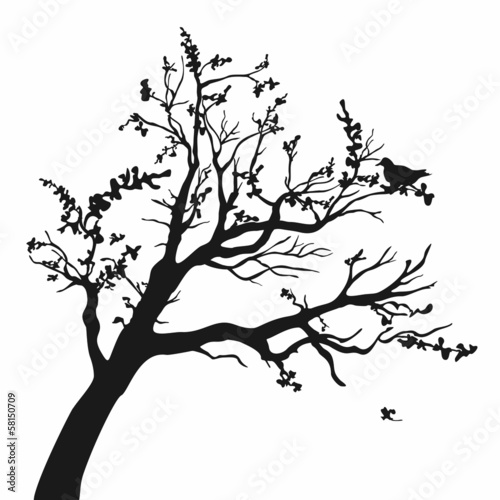 Tree silhouettes. - 58150709