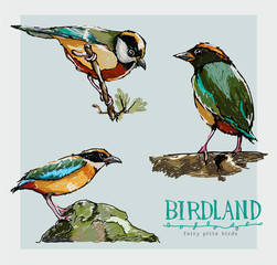 pitta bird character painted
