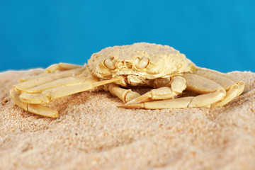 Crab exoskeleton on sand