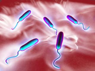 These Gram-negative rod-shaped bacteria have a single polar flag