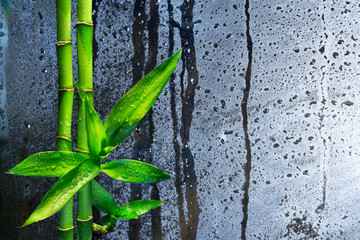 stalks bamboo on wet glass