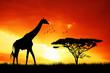 canvas print picture - giraffe in African landscape