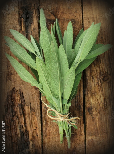 Vintage photo of fresh sage on wooden table
