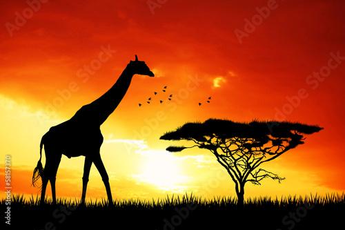 canvas print picture giraffe in African landscape
