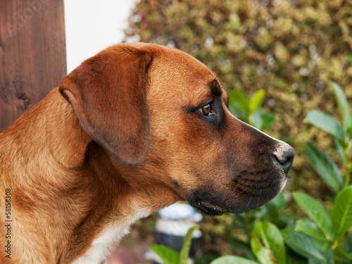 Portrait of young crossbreed dog