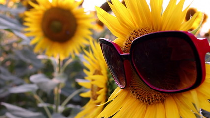 Sunflowers with glasses in a funny scene