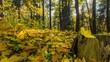autumn forest, timelapse panorama