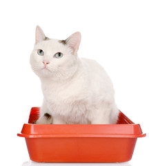 kitten in red plastic litter cat. isolated on white background