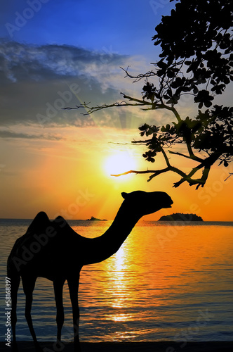 A silhouette of a camel at sunset