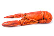Red lobster isolated on white