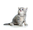 cat kitten isolated on white