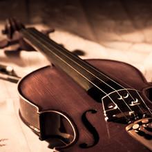 violon millésime
