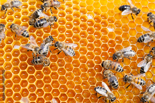 Life of bees