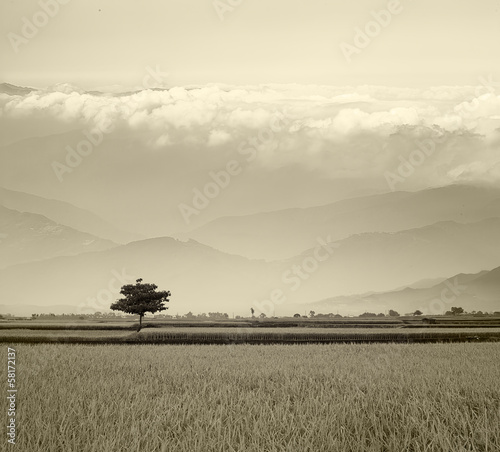 Beautiful paddy place(b/w)