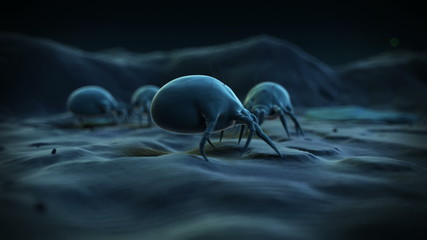 Typical dust mites crawling around